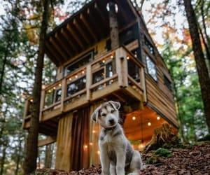 beautiful, dog, and Homewood image