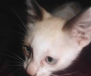 cat, Gatos, and cats image