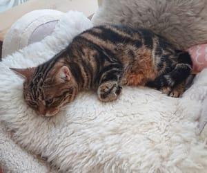 cat, instagram, and hidefumi usami image