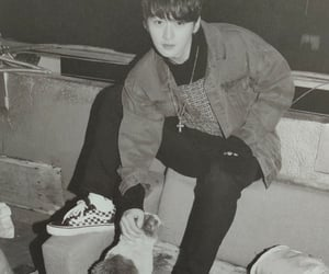 cat, scan, and predebut image