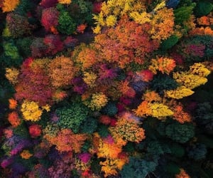 article, autumn, and school image