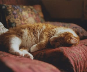 cat, animal, and cozy image