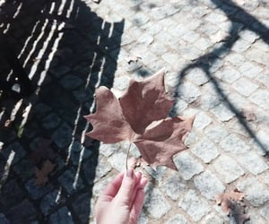 autumn, leaf, and one image