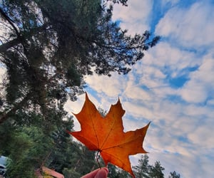 autumn, maple leaf, and photography image