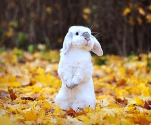 autumn, rabbit, and fall image