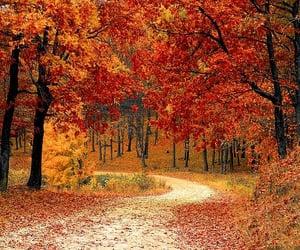 autumn and season image