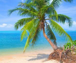 beaches, escape, and tropics image