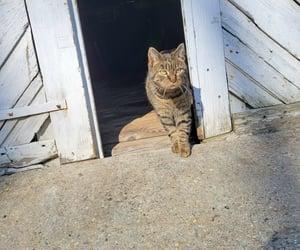 barn, farm, and cat image