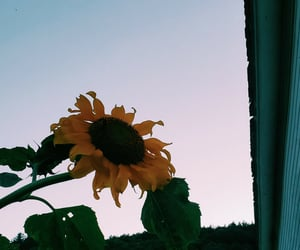 barn, farm, and sunflower image
