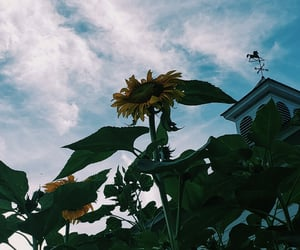farm, flowers, and summer image