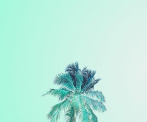 background, mint green, and palm tree image