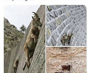 goat, hehe, and high image