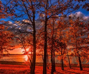 autumn, nature, and sunset image