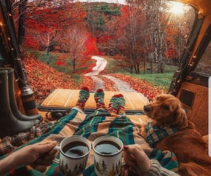 autumn, latte, and leaves image