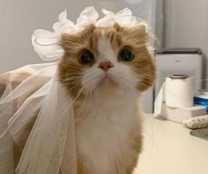alternative, cat, and kitty image