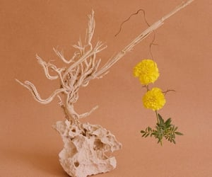 driftwood, flowers, and peach image