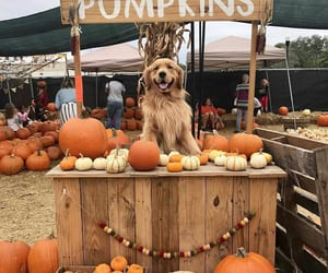 adorable, fall, and little image