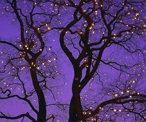 tree, lights, and purple image