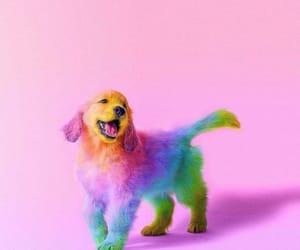 rainbow colors, media agnostic design, and colorful photos. image