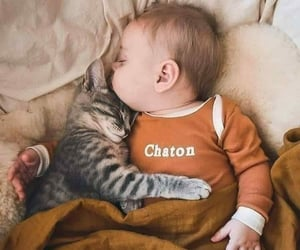 adorable, aww, and cat image