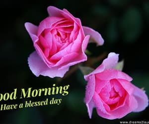 rose, good, and morning image