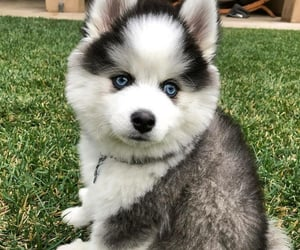 adorable, aww, and cute dogs image