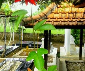 flower, kuburan, and bunga image
