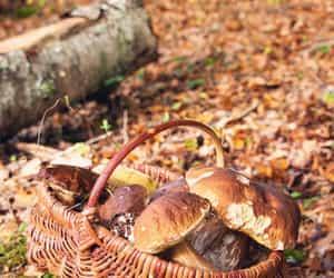 autumn, automne