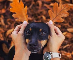 autumn, dog, and dogs image