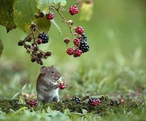 berries and mouse image