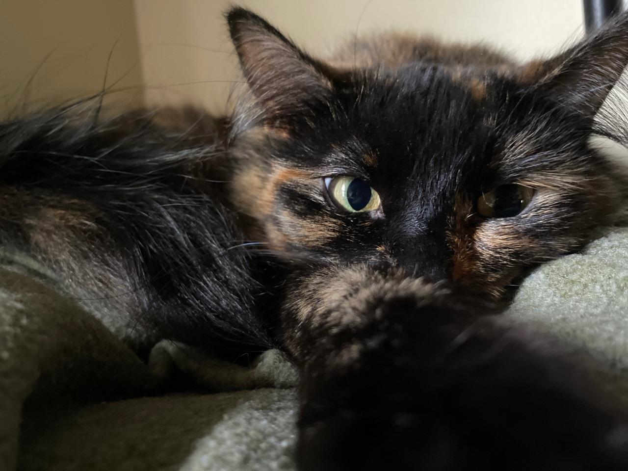 cat, cutesy, and fluff image