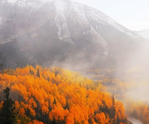aesthetic, forests, and autumn image