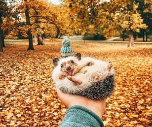animal, astrophe, and cute image