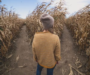 choice, choices, and cornfield image