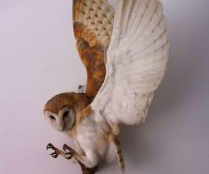 athena, bird, and Greece image
