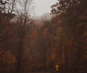 aesthetic, fall, and leaves image