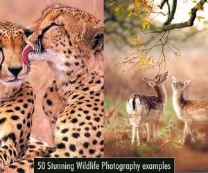 photography, wildlife photography, and wildlife photos image