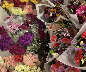 flowers blooming, flowers, and flowers blossom image