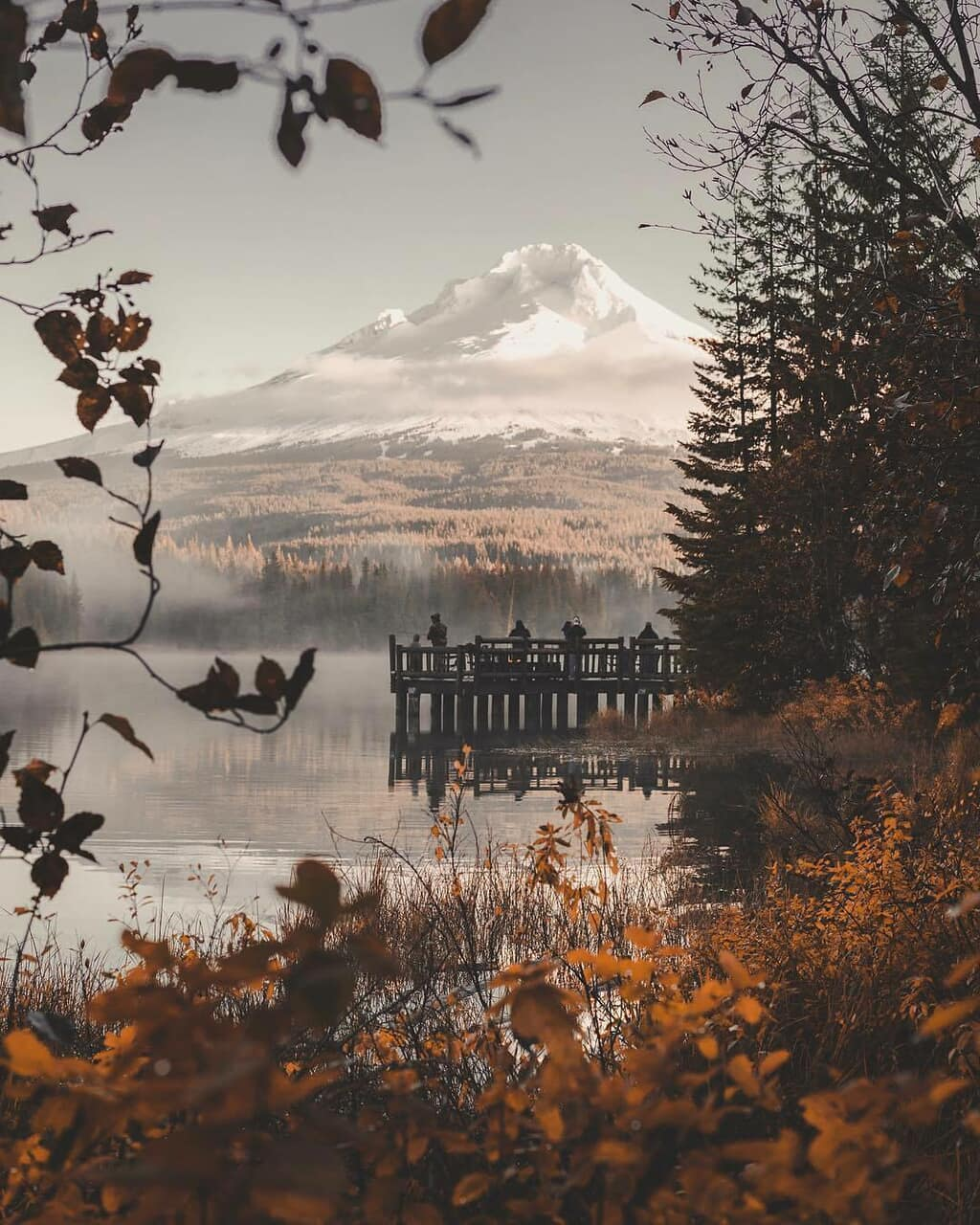 fall, nature, and Pumpkin Pie image