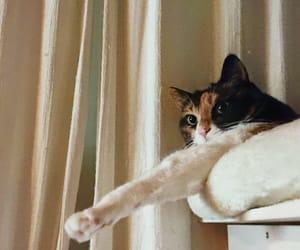 usamix_1974 振り返ると腕なが猫。#hug_cat