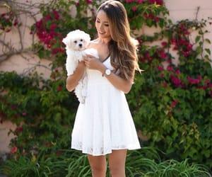 dog, pinterest, and fashion image