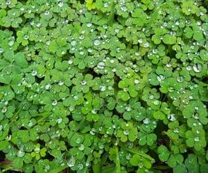 clover, nature, and trebol image