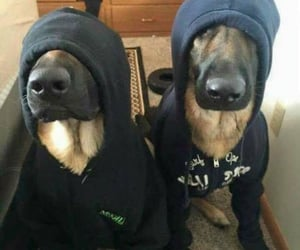 dogs, hoodie, and funny image