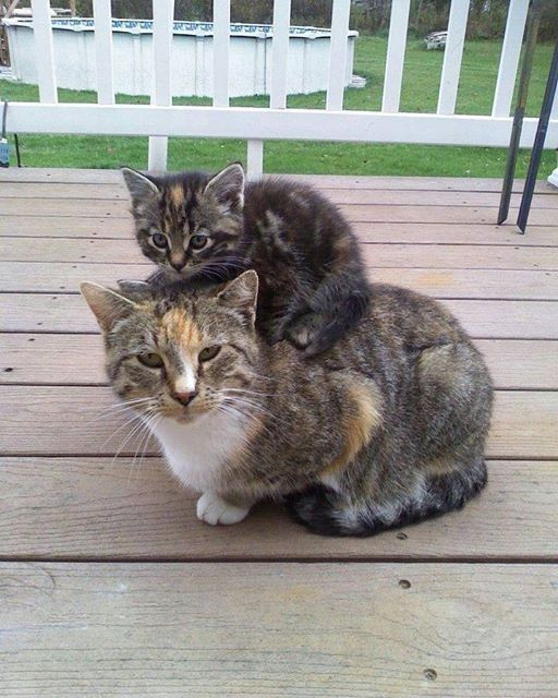 kitty and cat image