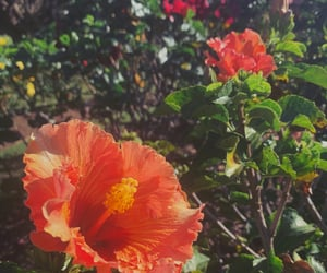 aesthetics, flowers, and tropical image