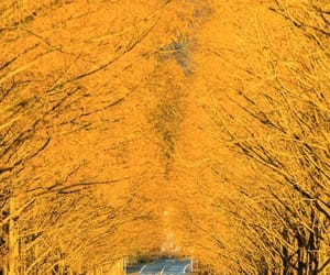 autumn, photography, and yellow image