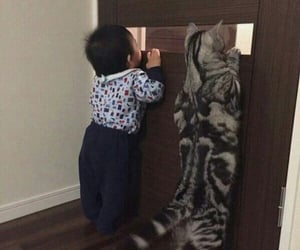 animal, cat, and baby image