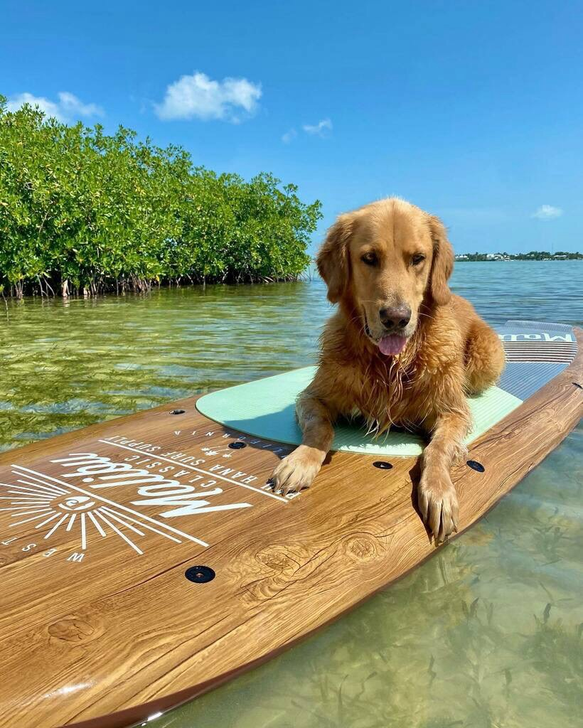 Aloha, amazing, and animal image