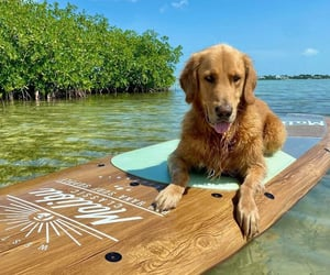 Yes, Guac has also mastered the paddleboard! _photo by@TheGoldenRatio4| Twitter