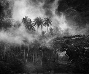 2010, indonesia, and mosquito coast image